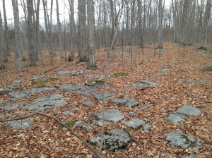 Sugarbush on fractured Limestone knoll