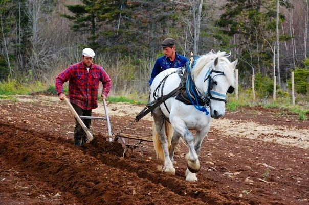 Dixie teaching Joel Huntley to plough at the first NFG
