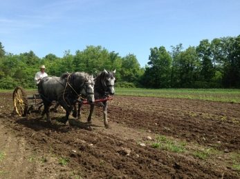The riding cultivator