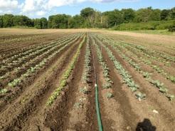 Irrigation - fancy!