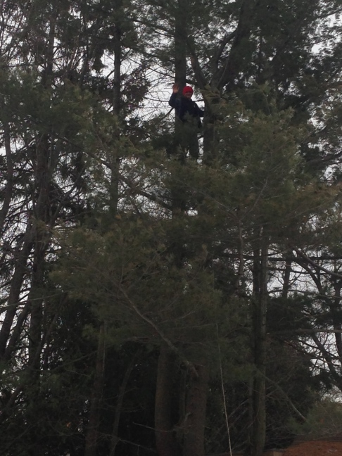Lahbwee 50' up a tree we were tying off for felling.