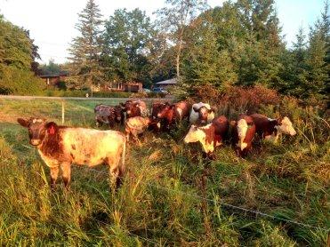 Suburban ranching