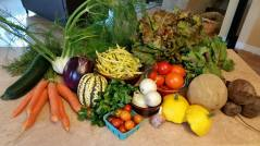 veggies_wk12