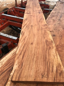 Some beautiful maple coming off the sawmill