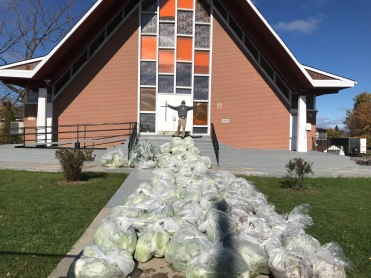 6000 lbs of Kimchi crops delivered to customers at Kingston Korean Church